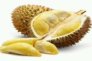 Cara menanam pokok durian monthong - Nursery Kebun Bandar