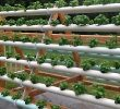4 Cara Budidaya Hidroponik Sayuran (Sederhana)
