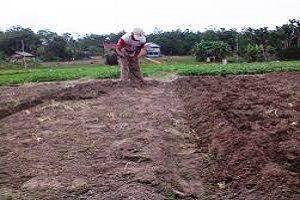 penggemburan lahan stevia