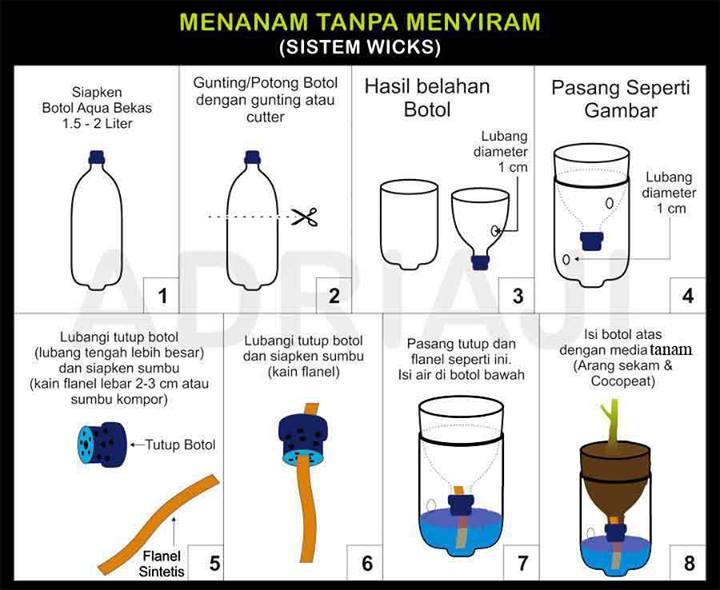 tips cara menanam bawang merah