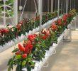 6 Cara Menanam Strawberry di Pipa Paling Mudah