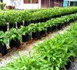 9 Cara Menanam Sayur Fertigasi (Panduan Praktis)
