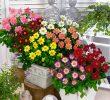 6 Cara Menanam Bunga Dahlia dan Perawatannya