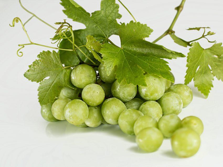 7 Cara Menanam Cangkokan Anggur di Halaman Rumah Paling Mudah