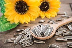3 Cara Menanam Bunga Matahari Paling Mudah Ilmubudidaya Com