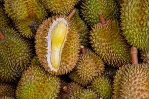 3 Cara Menanam Durian Bawor dengan Mudah