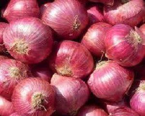 cara menanam bawang dengan paralon