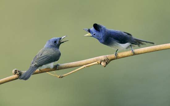 12 Cara Budidaya Burung Berkicau Sangat Merdu