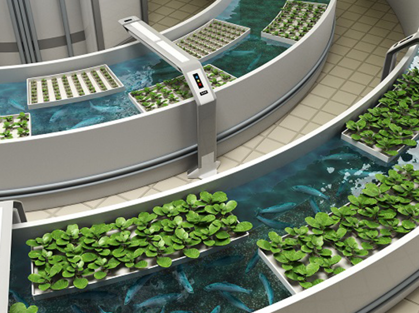 5 Cara Budidaya Ikan Aquaponik Bagi Pemula