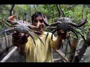 Cara Budidaya Dan Pembesaran Kepiting