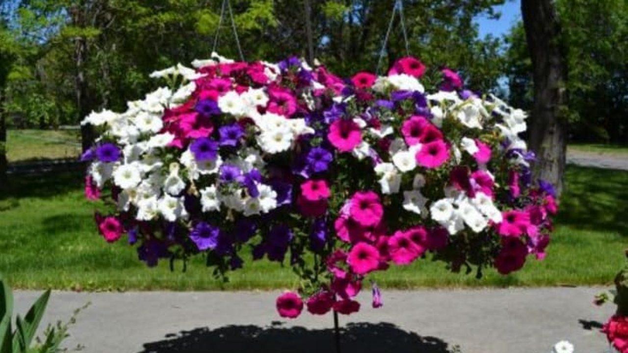 7 Jenis Bunga Yang Cocok Untuk Halaman Rumah Kamu Ilmubudidaya Com