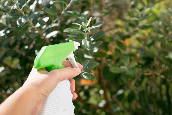9 Cara Mengatasi Hama Tanpa Pestisida yang Belum Diketahui -  IlmuBudidaya.com