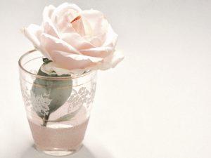 14 Cara Merawat Bunga Mawar 1 Tangkai Agar Tetap Hidup Dan Segar Ilmubudidaya Com