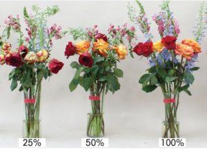 Cara Merawat Bunga Hidup Dengan Air