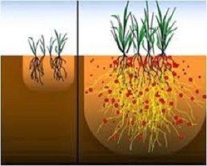 manfaat mikoriza untuk tanaman