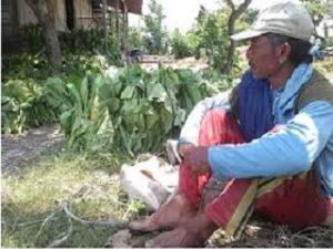 mengapa petani Indonesia tidak sejahtera