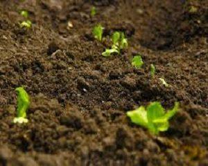 cara menyuburkan tanah pertanian