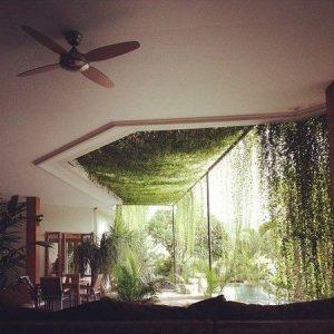 kanopi english ivy