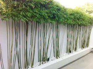 tanaman dinding bambu