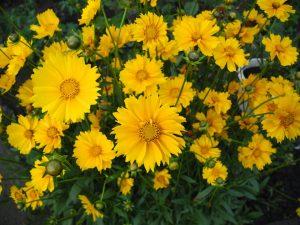 Cara Merawat Bunga Hidup Agar Tidak Layu Dan Tetap Tumbuh Segar Ilmubudidaya Com