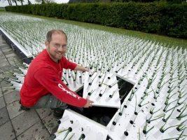cara menanam bawang daun dari biji hidroponik