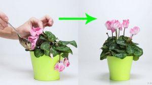 cara membuat tanaman layu menjadi segar kembali