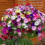 Bunga Yang Cocok Ditanam Di Teras