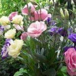 Bunga Yang Cocok Ditanam Saat Musim Hujan